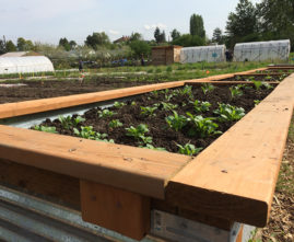 new garden beds at Marra Farm